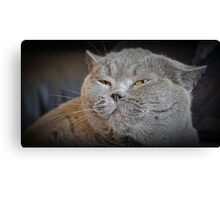 Yes...I Have Attitude! Canvas Print