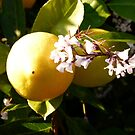 Lemon Entry, My Dear Watson by DEB CAMERON