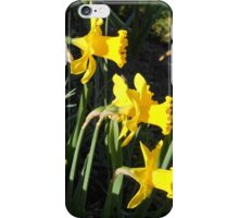 Chorus of Daffodils (Lent Lilies) iPhone Case/Skin