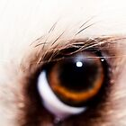 A Dog's Eye by ©Josephine Caruana