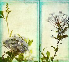 ~ Plumbago by Two ~ by Lynda Heins