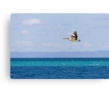 Australian Pelican over Water Canvas Print