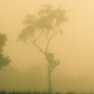 Tree by Luke Stephensen