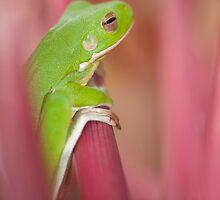 Froggie  by Jenny Dean