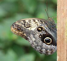 Butterfly by Maggie Lowe