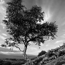 Tree by PaulBradley