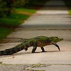 gator crossing by Manon Boily