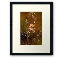 banana spider symmetry  Framed Print
