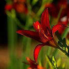 Lily In Red by Kathy Weaver