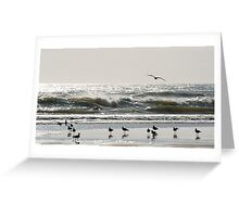 Early Birds - birds on the beach Greeting Card