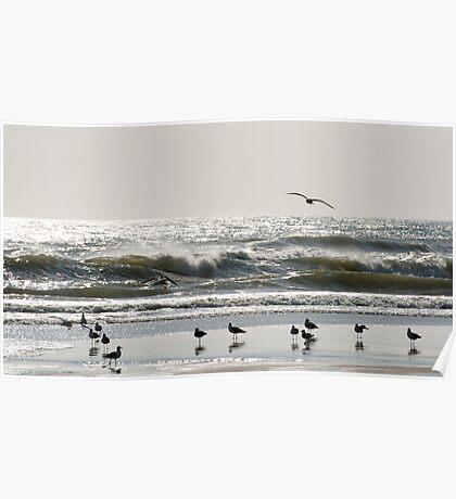 Early Birds - birds on the beach Poster
