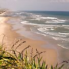 Maunganui Bluff - northland NZ by Jenny Dean