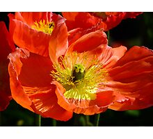 Poppy Fusion Photographic Print