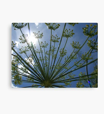 daylight dill too Canvas Print