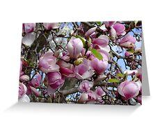 Magnolia Soulangeana - San Jose Greeting Card