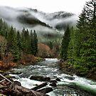Winters Joy ~ Quartzville Creek Winter ~ by Charles & Patricia   Harkins ~ Picture Oregon