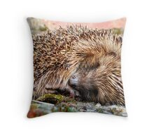 Sleeping Hedgehog Throw Pillow