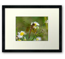 Flower Hugger Framed Print