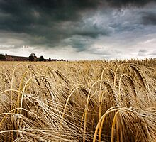 Before the Harvest by Chris Tait
