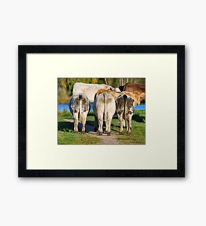 Three Cows Framed Print
