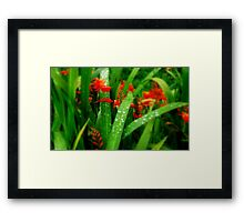 Soft Touch of Orange & Green  Framed Print