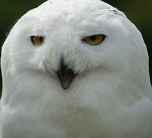 Snowy Owl by youmeus