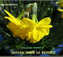 Wales Challenge Winner Banner by Kathryn Jones