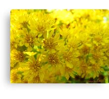 Yellow fun Canvas Print