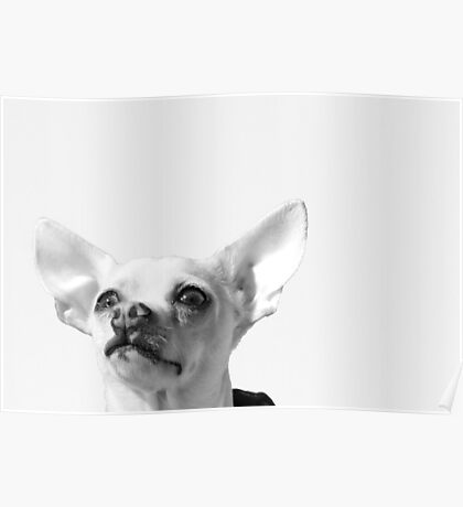 Chihuahua and the Pet Portrait Message Poster