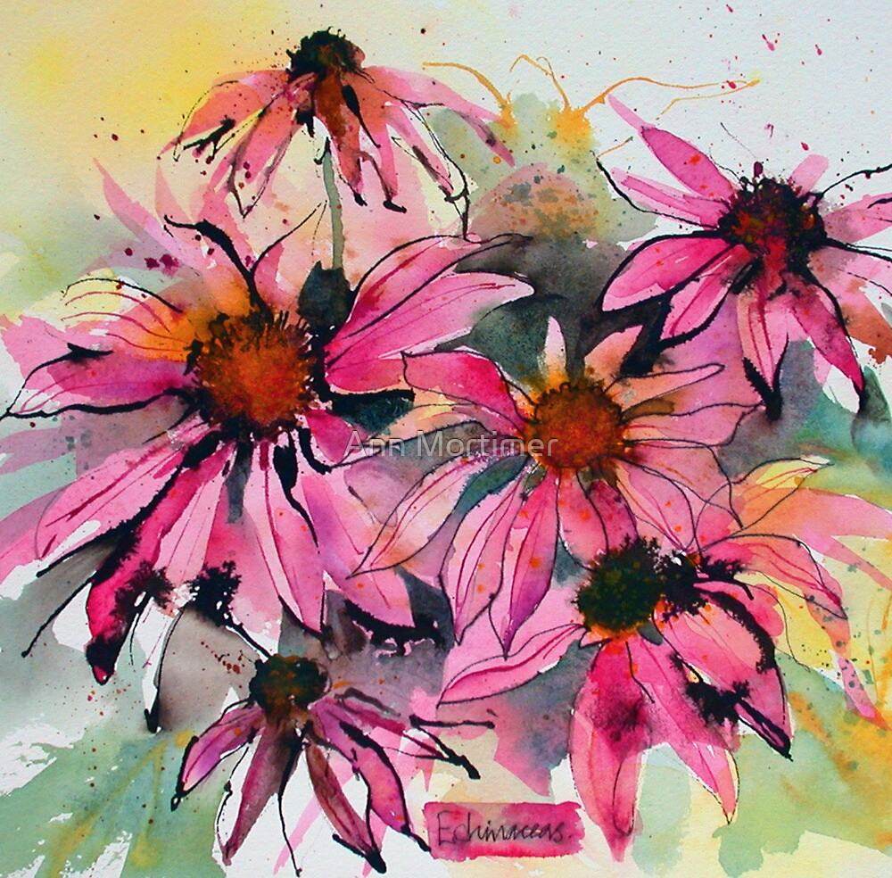 Pink echinaceas by Ann Mortimer