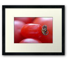 Little Tomato Framed Print
