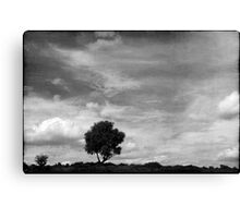 Nature in black and white XIII Canvas Print