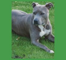 Beautiful American Staffordshire Terrier Kids Clothes