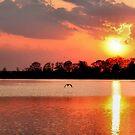 Osprey Against the Sun by Eileen McVey