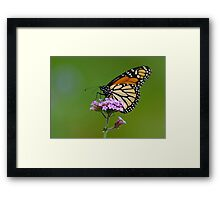 Monarch Butterfly on an August Afternoon Framed Print