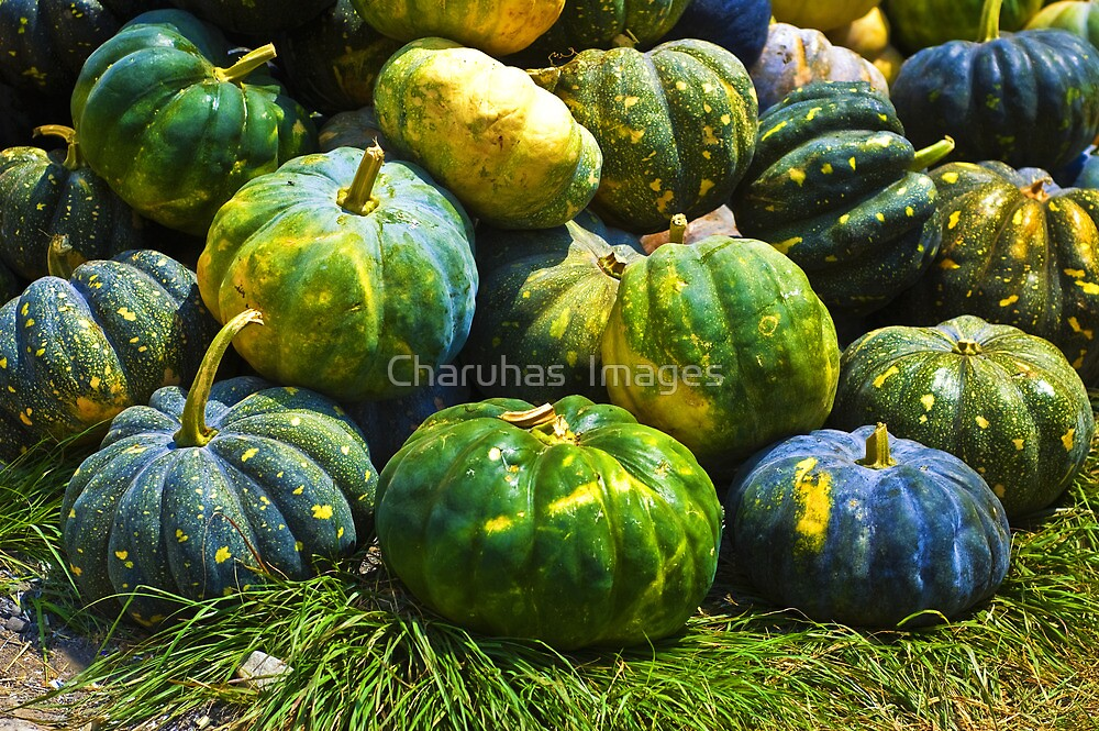 Pumpkins  by Charuhas  Images