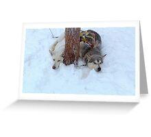 Huskies snoozing Greeting Card