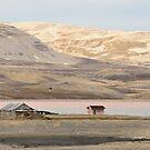 arctic tundra by Steve
