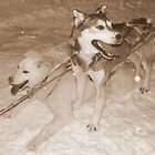 Husky Sledding at Night by Honor Kyne