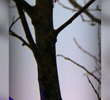 Treemendous by Simonka