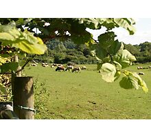 Rural farming Photographic Print