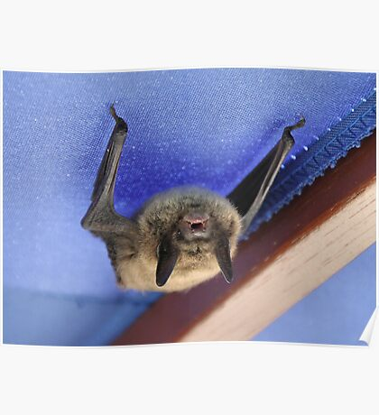 """Da Bat' Poster"