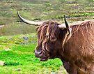 Highland Cattle on Skye by Yukondick