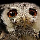 White-faced Scops Owl by Mark Hughes