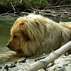 Dog....Or Lion? by jodi payne