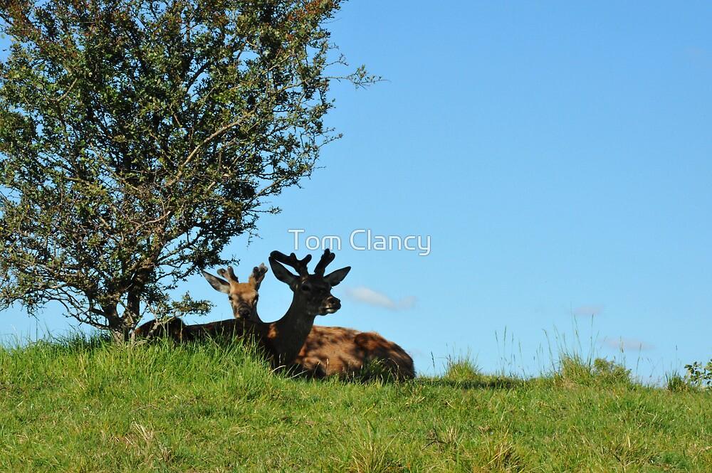 Deer by Tom Clancy