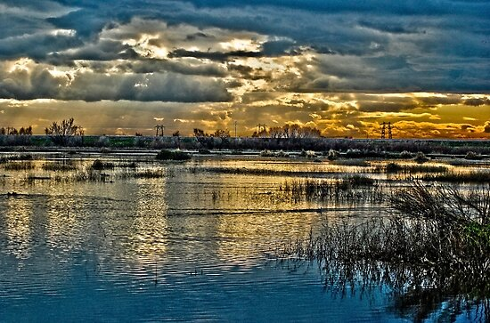 Wetlands in High Definition Resolution   by Lenny La Rue, IPA