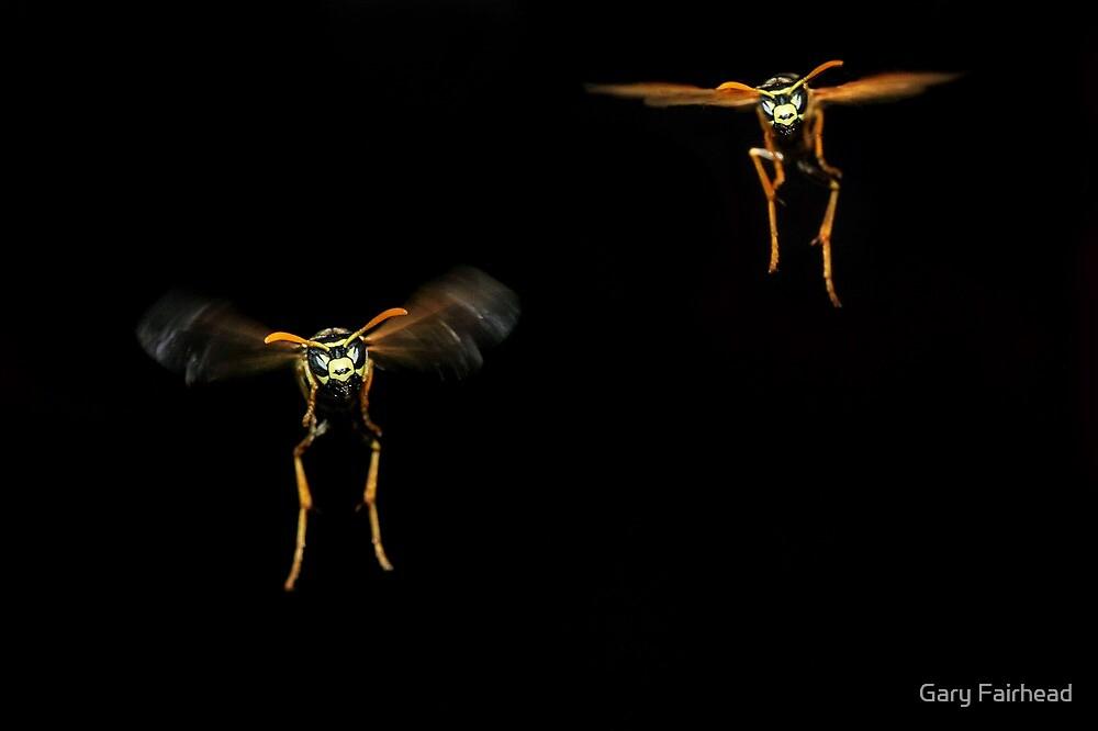 Wasps by Gary Fairhead