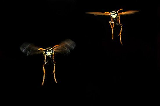 Wasps by Gary Fairhead