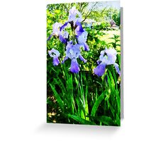 Purple Irises in Suburbs Greeting Card